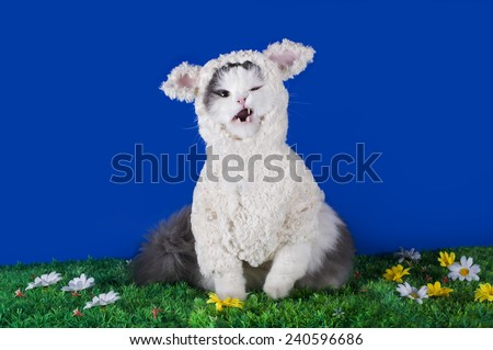 cat dressed as a sheep - a symbol of 2015 - stock photo