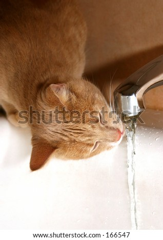 Cat drinking tap water