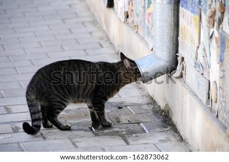 Cat drinking water from a street pipe in Tel Aviv street - stock photo