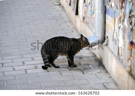 Cat drinking water from a street pipe in Tel Aviv street - stock photo