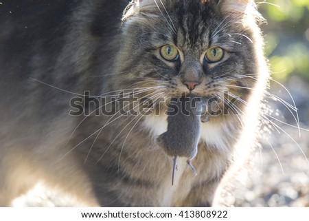 Cat eating mouse - stock photo
