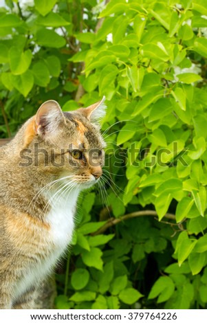cat European breed sitting next to the green Bush
