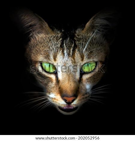 Cat face close-up - stock photo