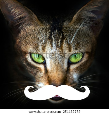 Cat face close-up with large false mustache like a hipster - stock photo