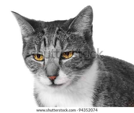 Cat Face Closeup with colored eyes and black and white isolated on white background - stock photo