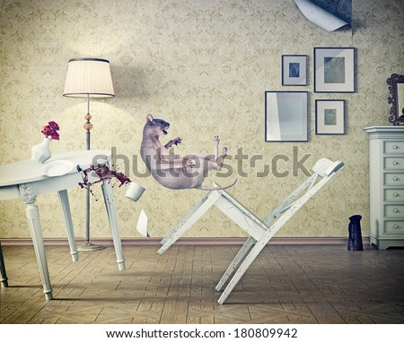 cat falling  in vintage room. photo compilation concept - stock photo