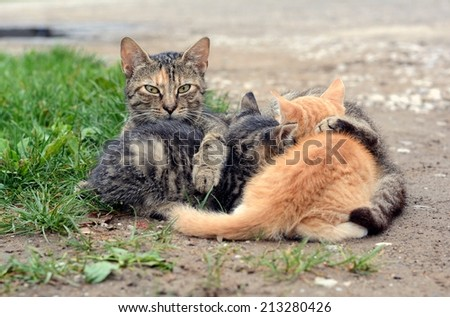 cat family - stock photo