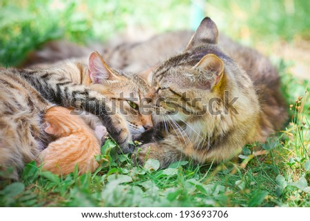 Cat family. Mother father and child. - stock photo