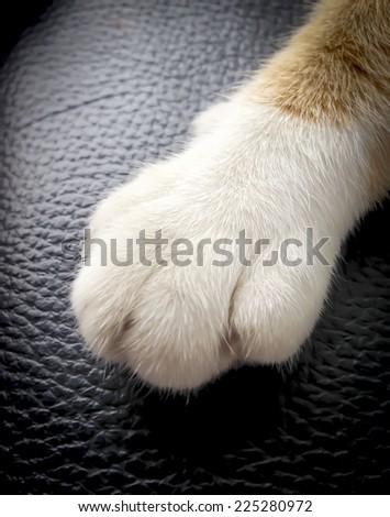 cat feet on black background - stock photo