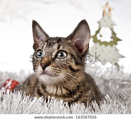 cat, gift, Christmas, snow, grey, Santa Claus. winter, silver, white