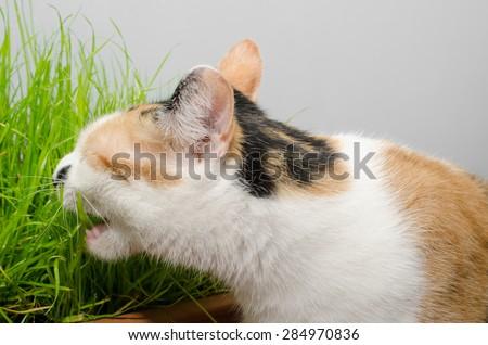 cat grass - stock photo