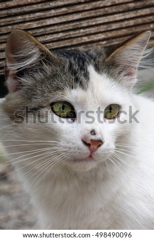 Cat ( green eyes )