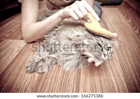 cat grooming  - stock photo