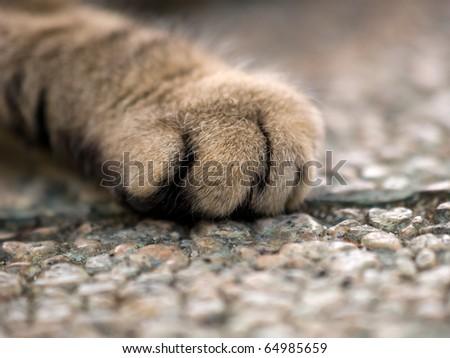 Cat hands - stock photo