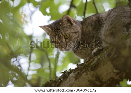 cat high up in tree look down