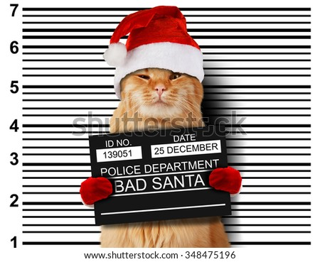 Cat holding a banner offender on white background. Violation of the law. Bad santa. - stock photo