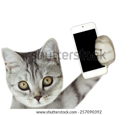 cat holding mobile phone - stock photo