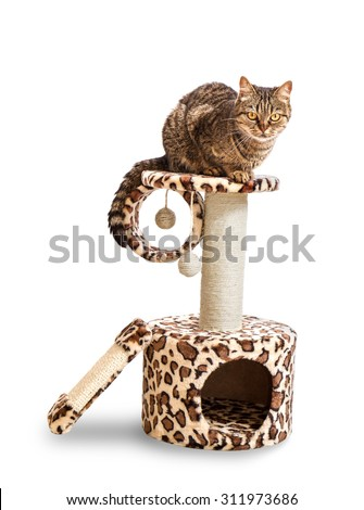 Cat house and the cat. Isolate on a white background - stock photo