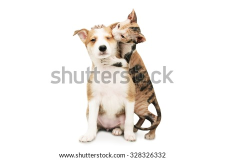 Cat hugging a dog's neck. Isolated on white