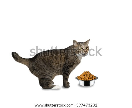 cat hungry and is going to eat