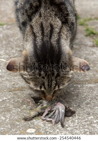 Cat hunted a bird  - stock photo