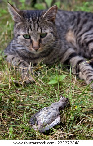 Cat hunted a bird on meadow - stock photo