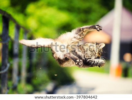 Cat hunted a sparrow in the air jump - stock photo