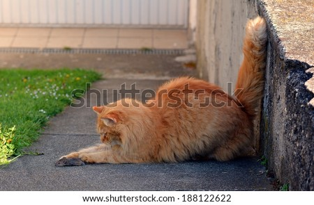 Cat hunting a mouse - stock photo