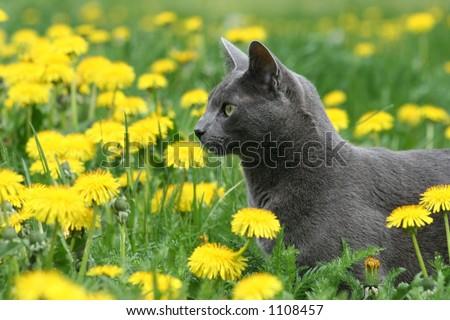 Cat Hunting Through Flowers - stock photo