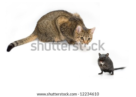 Cat hunts on a mouse - stock photo