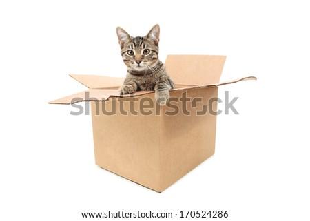 Cat in a box - stock photo