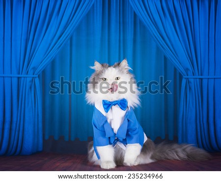 cat in a dark blue jacket and tie on stage - stock photo