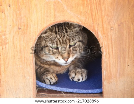 Cat in a kennel - stock photo