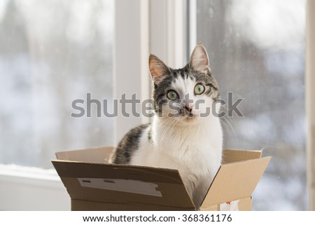Cat in a postal box, by the window - stock photo