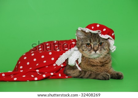 Cat in a red dress on a green background.
