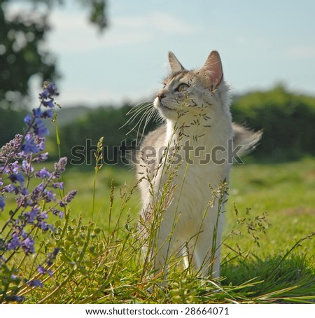cat in a rural setting - stock photo