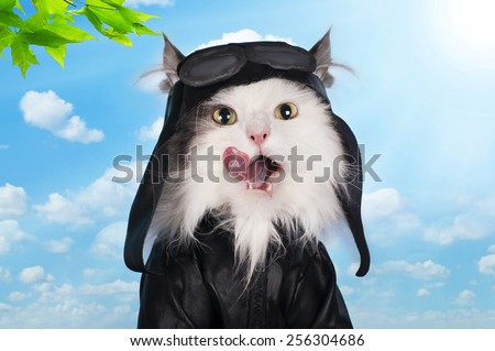 cat in a suit against the sky pilot - stock photo