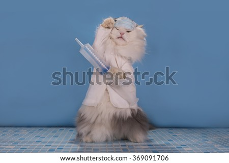 Cat in a suit doctor tells how to deal with the epidemic of influenza