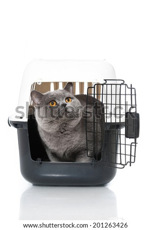 Cat in a transport box isolated on white - stock photo