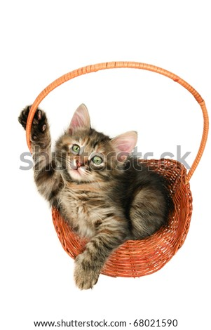 Cat in basket -  white background