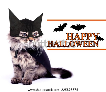 Cat in black cloak, isolated on white - stock photo