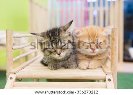 cat in cat cafe - stock photo