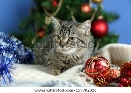 Cat in celebratory tinsel on Christmas tree background - stock photo