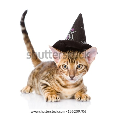 cat in costume for a masquerade. isolated on white background - stock photo