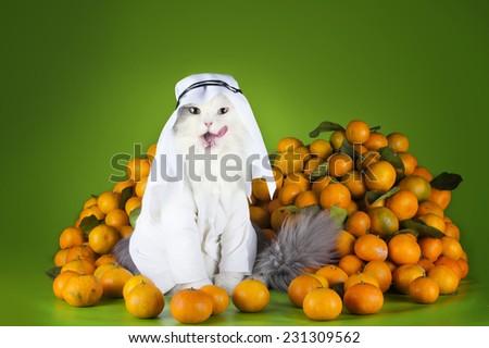 cat in costume Sheikh sells tangerines - stock photo