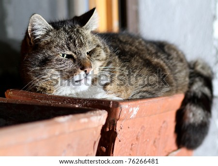 cat in flowerpot - stock photo