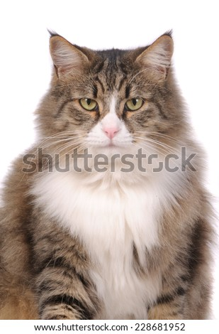 Cat in front of a camera looking forward to us  - stock photo
