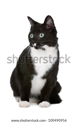 cat in front of a white background
