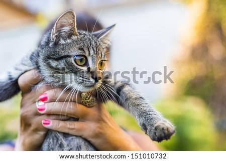 cat in girls hand - stock photo