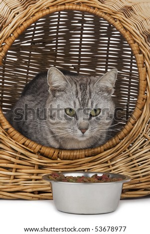 Cat in handbasket and saucer fed on white background. - stock photo